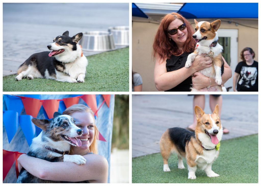 Puppy Dogs Party Floofers Corgis | Carter the Corgi Birthday Party Baseball Theme Orlando Canine Country Club Anna Christine Events Cute