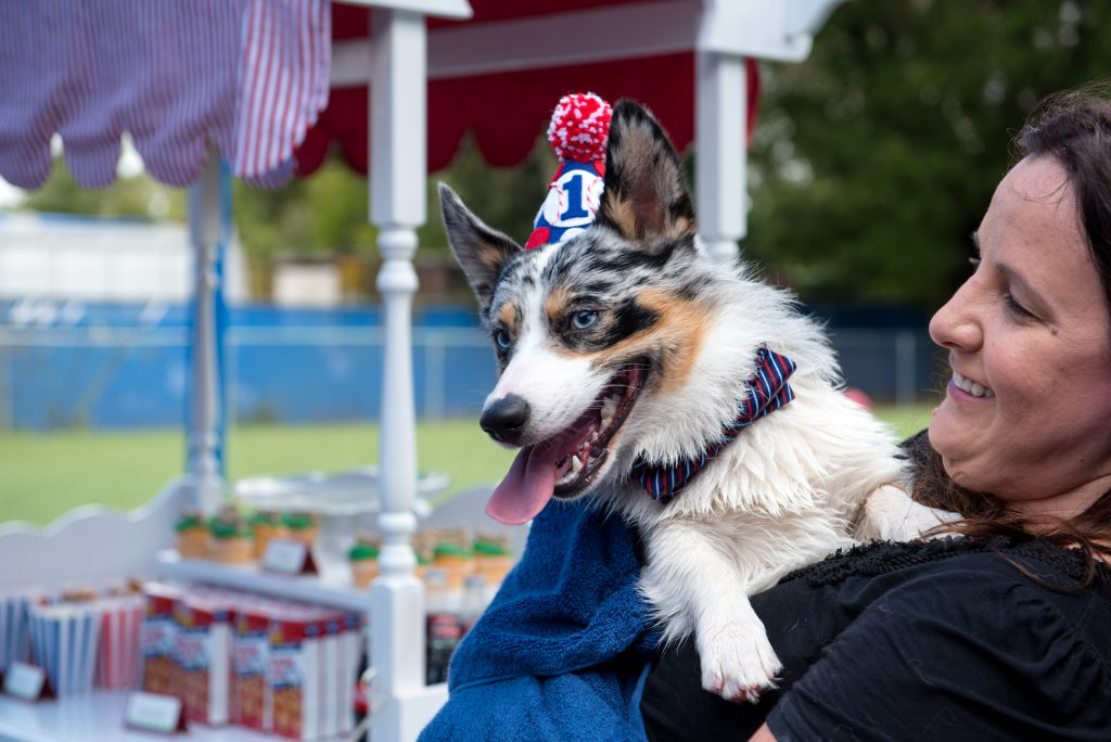 Dog Puppy of Honor in Birthday Hat | Carter the Corgi Birthday Party Baseball Theme Orlando Canine Country Club Anna Christine Events Cute
