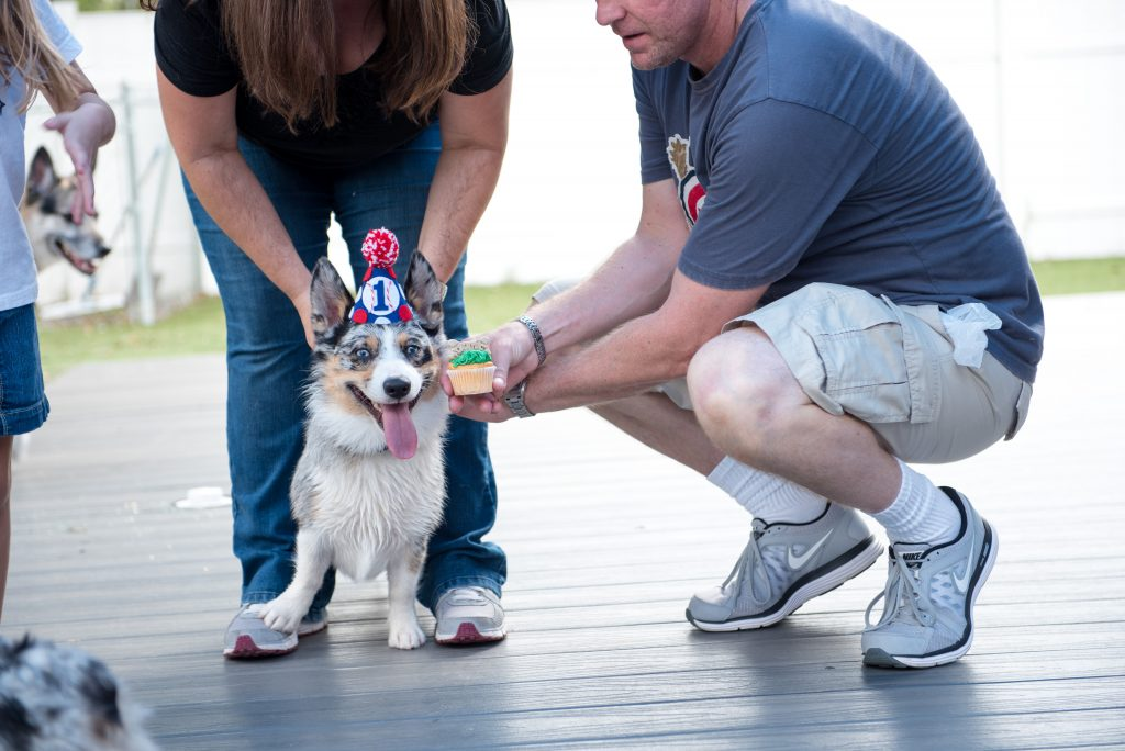 Carter the Corgi Cupcake Pupcake Birthday Party Baseball Theme Orlando Canine Country Club Anna Christine Events Cute